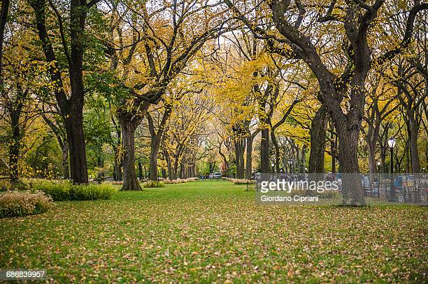 autumn in central park - cipriani manhattan stock pictures, royalty-free photos & images