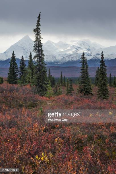 Autumn in Denali National Park