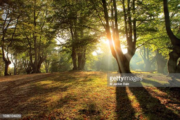 Autumn in Epping Forest