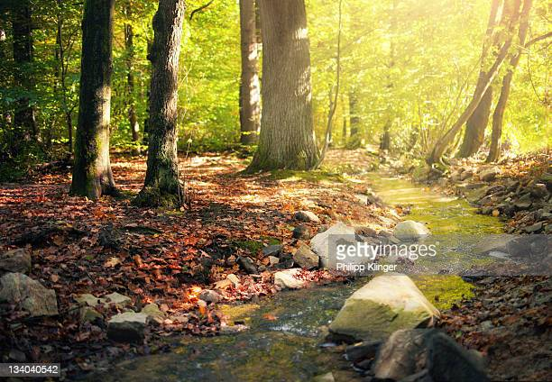autumn in forest - bad homburg stock pictures, royalty-free photos & images