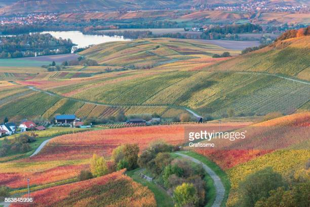 autumn in german vineyards near heilbronn germany - baden württemberg stock photos and pictures