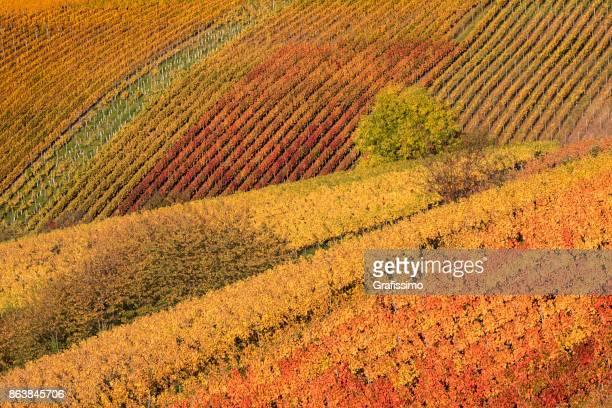 Autumn in german vineyards