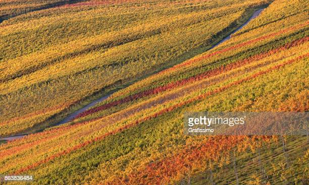 autumn in german vineyards with pathway - baden württemberg stock photos and pictures