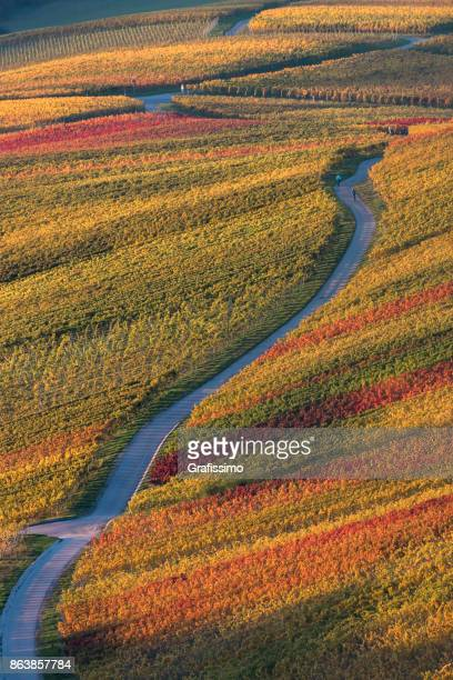 Autumn in german vineyards with pathway