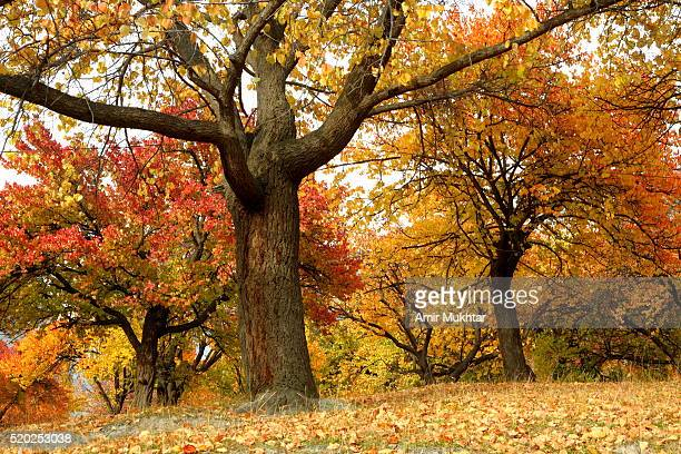 autumn in gilgit baltistan and skardu - skardu stock pictures, royalty-free photos & images