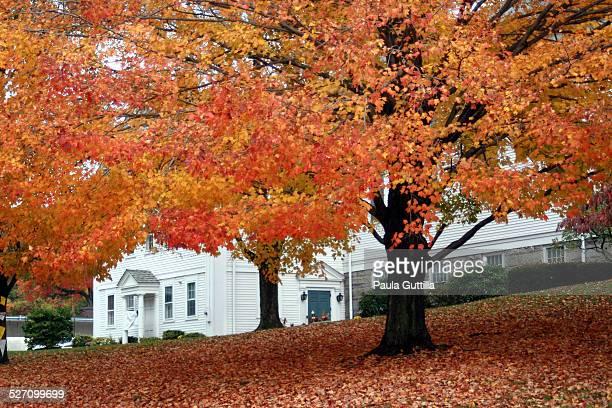 Autumn in Glastonbury, Conn.
