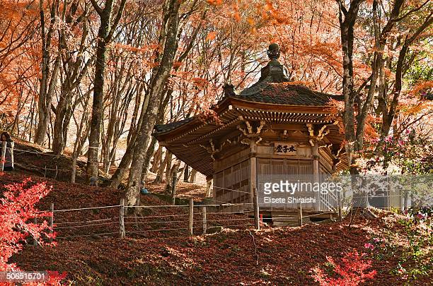 CONTENT] Autumn in Japan is perhaps more full season of colors The trees the mountains the streets and the nature gain a fiery redgold colored with...