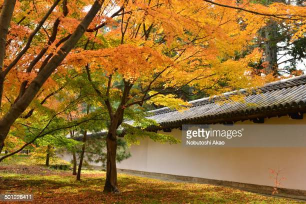 CONTENT] Autumn in Japan is very attractive season for its beautiful colors of Japanese maple gingko and other trees This photo was taken at one of...