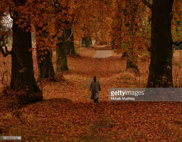 autumn in kashmir - srinagar stock pictures, royalty-free photos & images