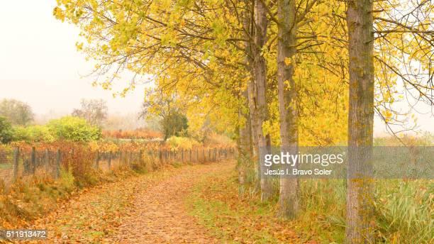 Autumn in La guardia
