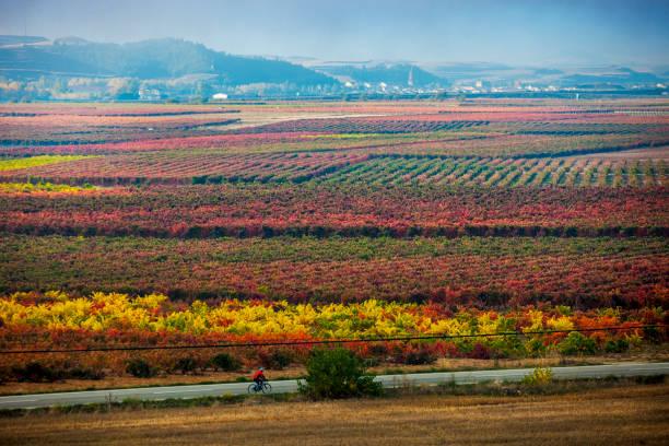 Autumn in La Rioja in Spain