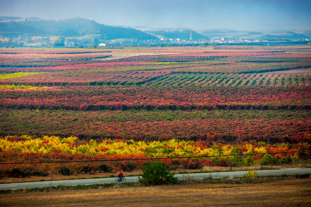 Autumn in La Rioja in Spain