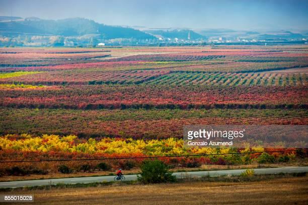 autumn in la rioja in spain - haro photos et images de collection