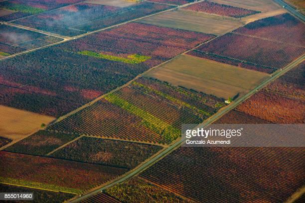 autumn in la rioja spain - haro photos et images de collection