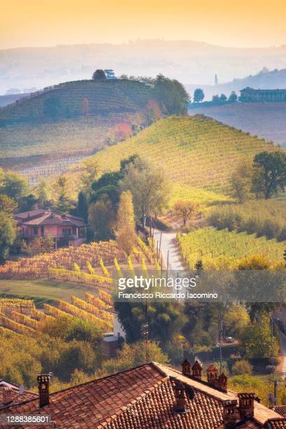 autumn in langhe region, piedmont, italy. vineyards at sunset - iacomino italy foto e immagini stock