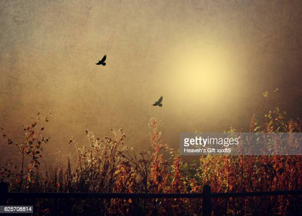 autumn in london - fine art stock pictures, royalty-free photos & images