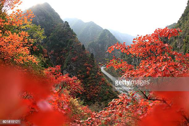 Autumn in Lushi County of Henan Province,China