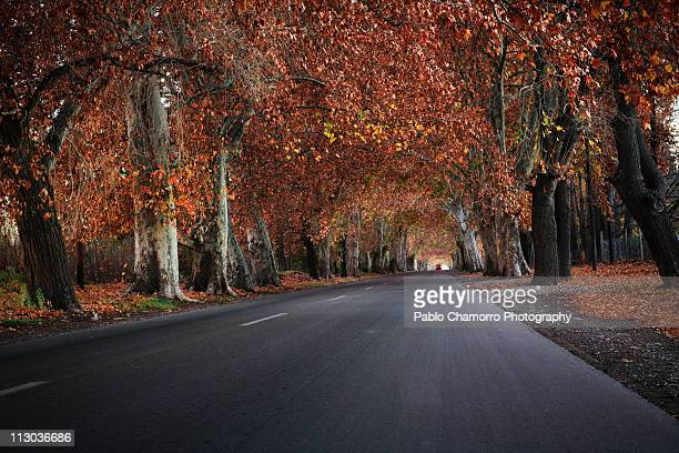 Autumn in Mendoza
