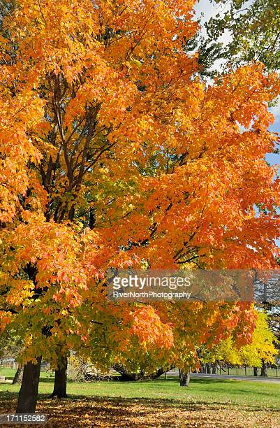 autumn in michigan - bloomfield hills michigan stock photos and pictures