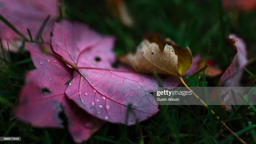 Autumn in My Veins : Stock Photo