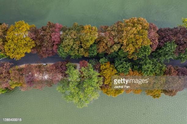 autumn in nanjing city - embellishment stock pictures, royalty-free photos & images