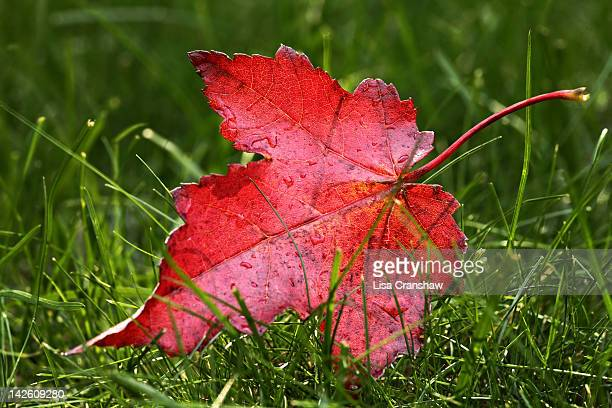 autumn in new england - lisa cranshaw stock pictures, royalty-free photos & images