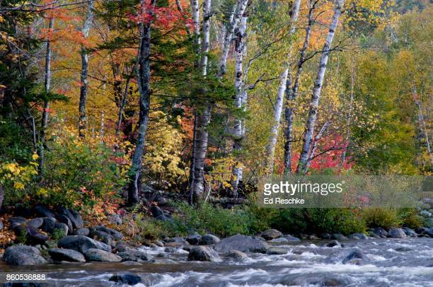 autumn in northern new hampshire, swift river and mixed deciduous forest - río swift fotografías e imágenes de stock