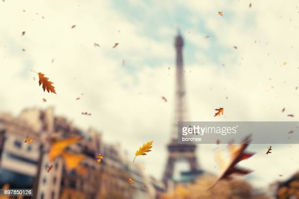 autumn in paris - autumn falls stock pictures, royalty-free photos & images