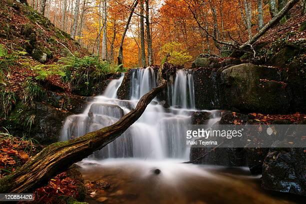autumn in quinto real - comunidad foral de navarra fotografías e imágenes de stock