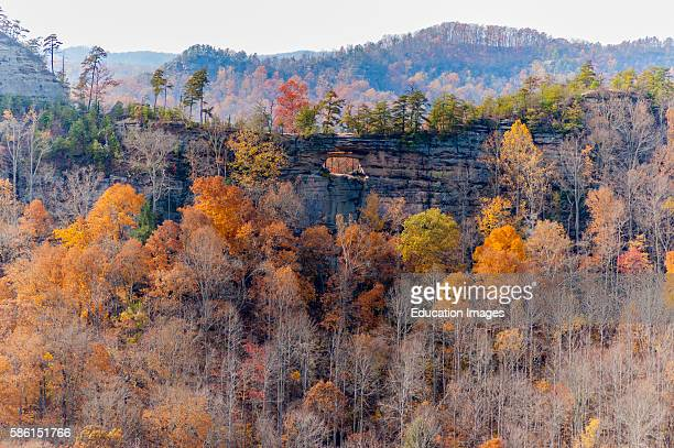 Autumn in Red River Gorge in Kentucky