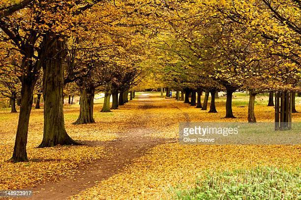 autumn in richmond park. - richmond park stock pictures, royalty-free photos & images