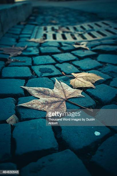 Autumn in Roma