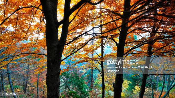 Autumn in Serra da Estrela Portugal