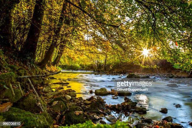 autumn in switzerland - gerold guggenbuehl stock-fotos und bilder