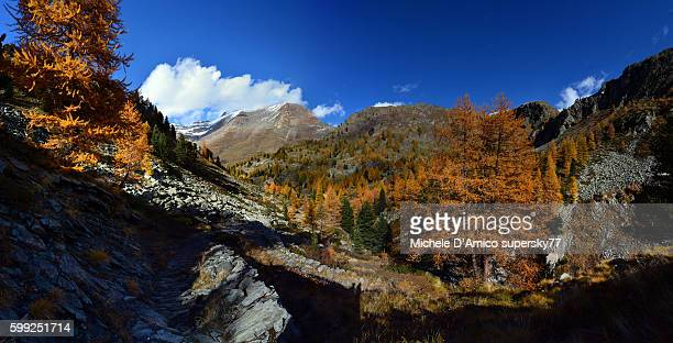autumn in the alps. - european larch stock pictures, royalty-free photos & images