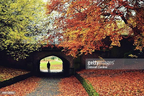 autumn in the arboretum - arboreto foto e immagini stock
