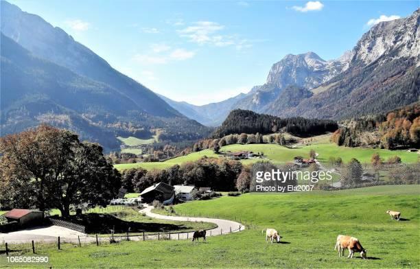 autumn in the bavarian mountains - dorf stock-fotos und bilder