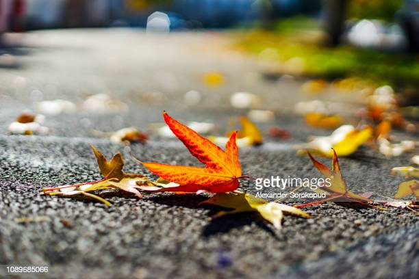 autumn in the city, yellow and red leaves on the ground, strasbourg - october stock pictures, royalty-free photos & images