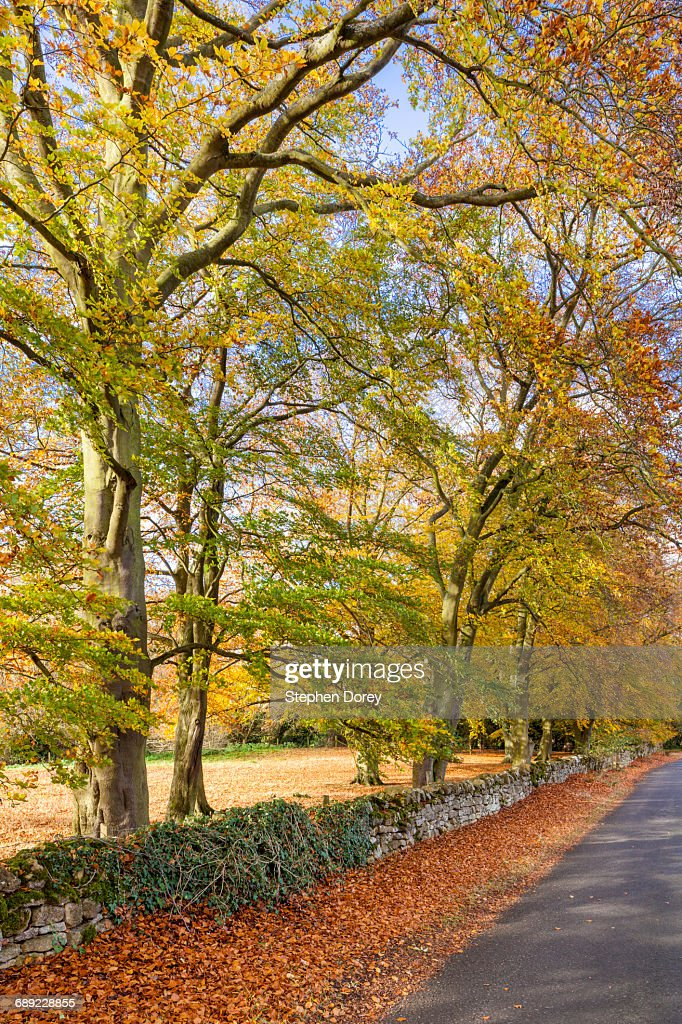 Autumn in the Cotswolds - Lane to Hailes Abbey UK : Stock Photo