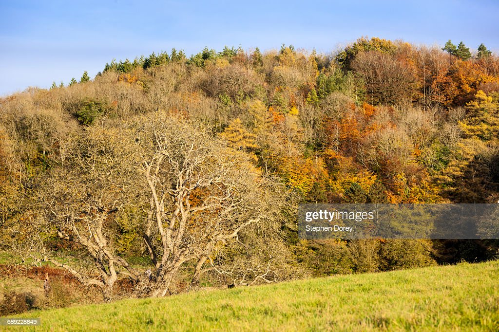 Autumn in the Cotswolds - Owlpen, Gloucesteshire : Stock Photo