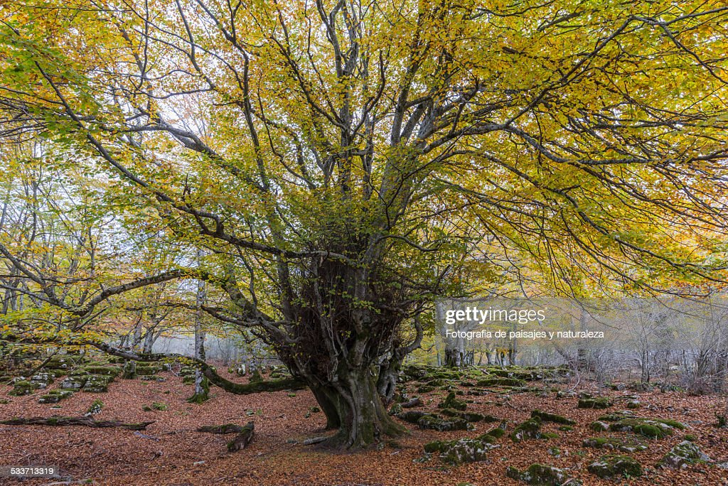 Autumn in the forest : Foto stock
