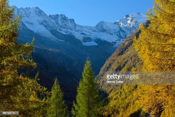 autumn in the gran paradiso national park, valnontey, piedmont, italy - parco nazionale foto e immagini stock