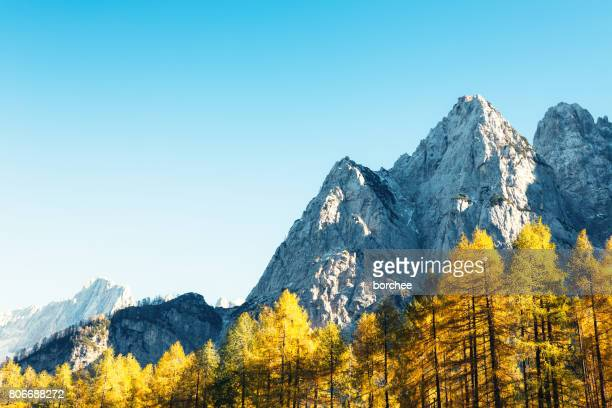 autumn in the mountains - larch tree stock pictures, royalty-free photos & images