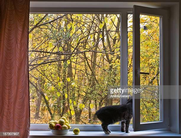 Herbst im offenen Fenster