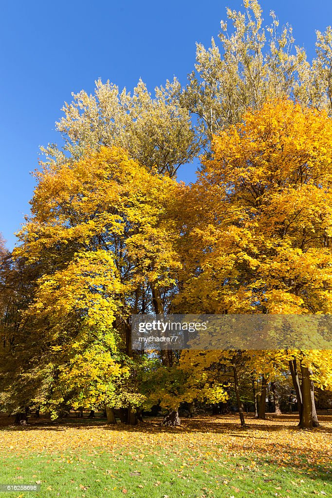 Autumn in the park, colorful trees : Foto de stock
