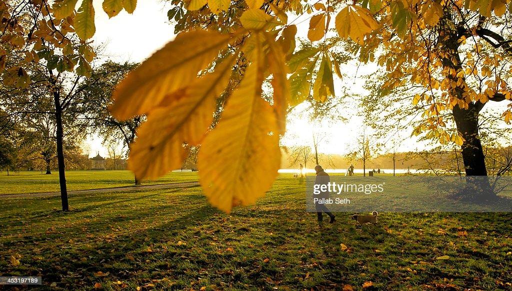 Autumn in the park : Stock Photo