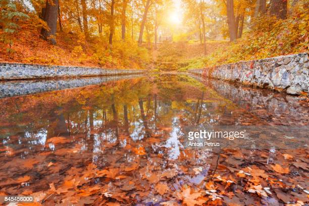 Autumn in the park. Reflection of the trees in the lake