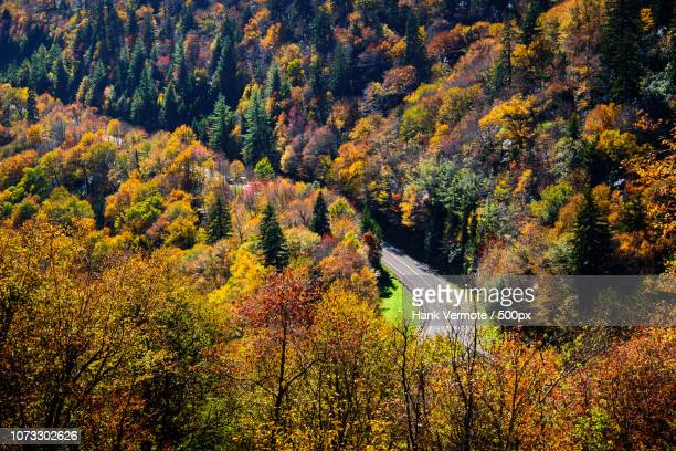 autumn in the smokies - hank vermote stock pictures, royalty-free photos & images