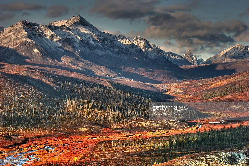 Autumn in the Yukon : Stock Photo