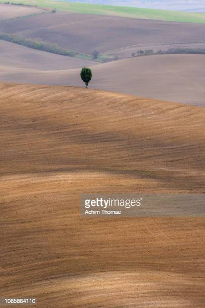 Autumn in Tuscany / Val D'Orcia / Italy